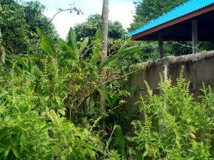 voller pflanzen und kraeuter